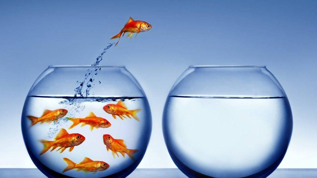 scrivere un preventivo per differenziarti, pesce rosso salta fuori dalla boccia di vetro